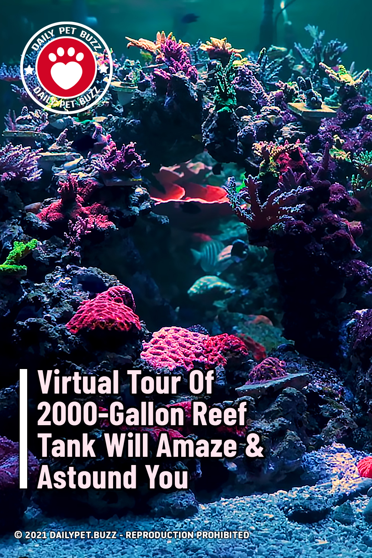 Virtual Tour Of 2000-Gallon Reef Tank Will Amaze & Astound You