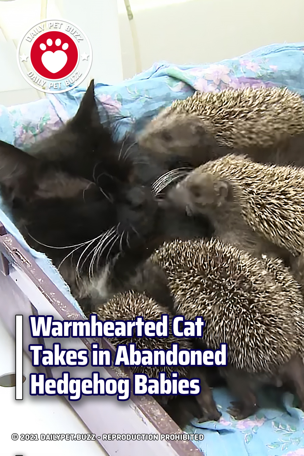 Warmhearted Cat Takes in Abandoned Hedgehog Babies