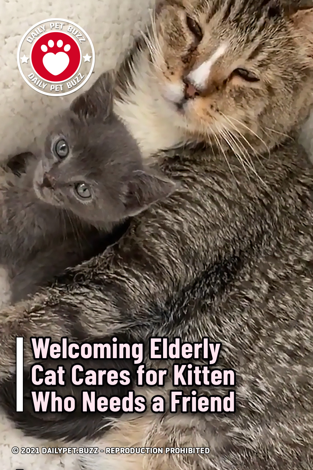 Welcoming Elderly Cat Cares for Kitten Who Needs a Friend