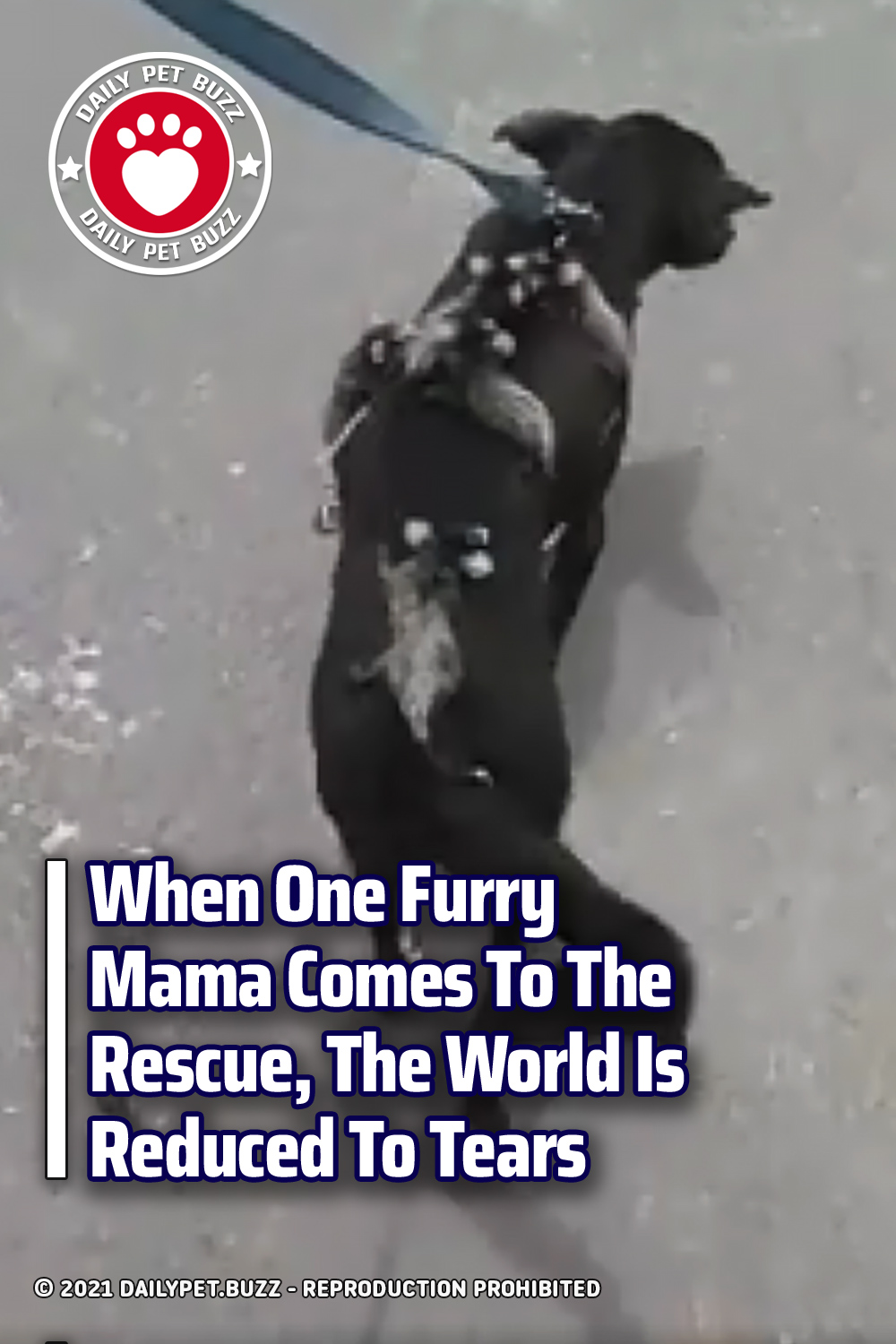 When One Furry Mama Comes To The Rescue, The World Is Reduced To Tears