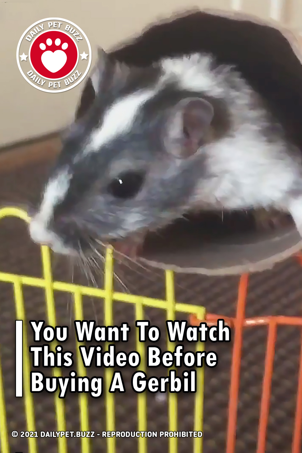 You Want To Watch This Video Before Buying A Gerbil