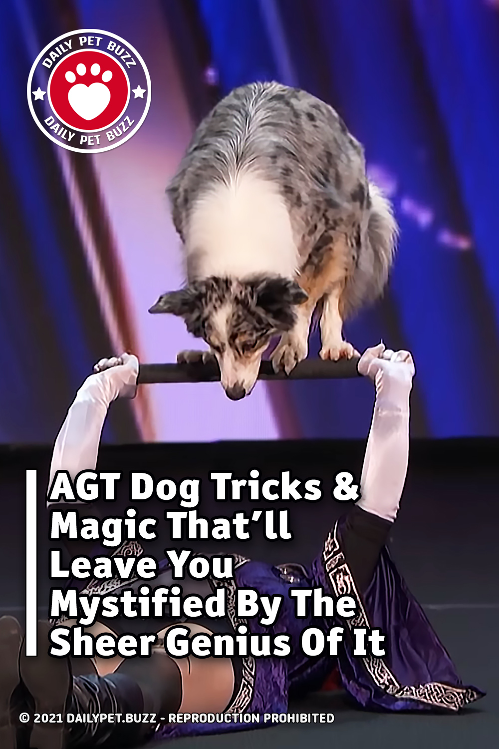 AGT Dog Tricks & Magic That\'ll Leave You Mystified By The Sheer Genius Of It