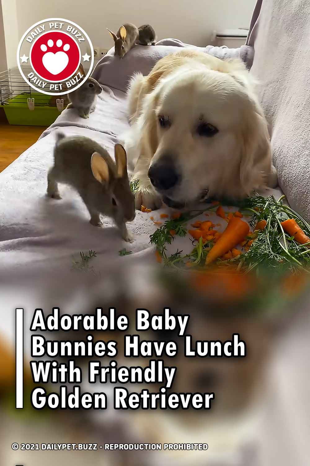 Adorable Baby Bunnies Have Lunch With Friendly Golden Retriever