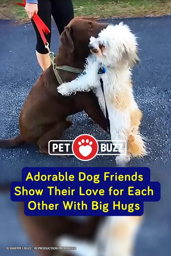 Adorable Dog Friends Show Their Love for Each Other With Big Hugs
