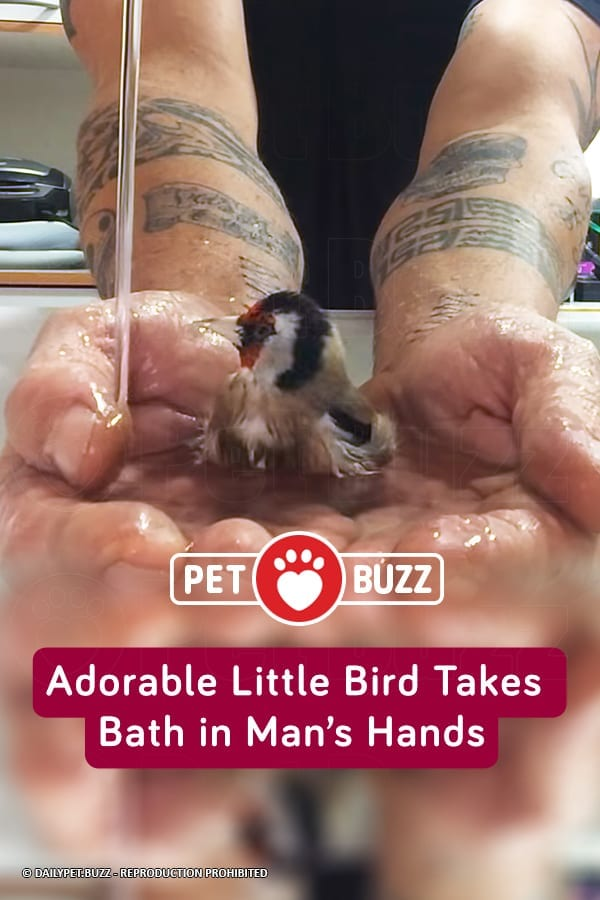 Adorable Little Bird Takes Bath in Man's Hands