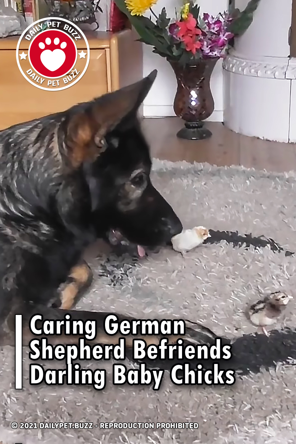 Caring German Shepherd Befriends Darling Baby Chicks