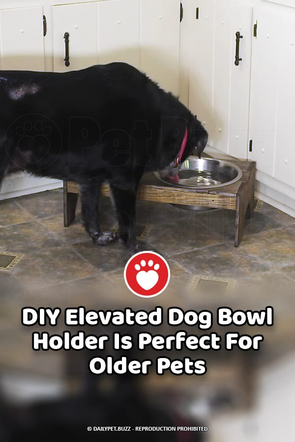 DIY Elevated Dog Bowl Holder Is Perfect For Older Pets