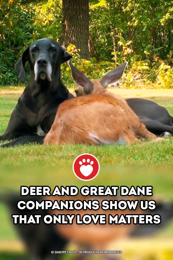 Deer And Great Dane Companions Show Us That Only Love Matters