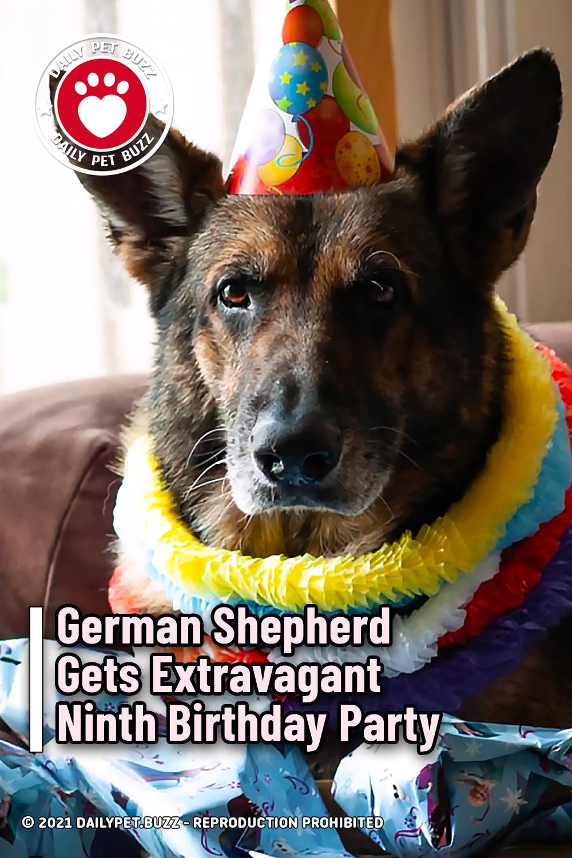 German Shepherd Gets Extravagant Ninth Birthday Party