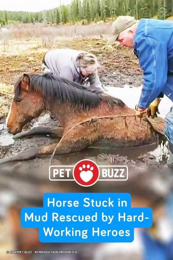 Horse Stuck in Mud Rescued by Hard-Working Heroes