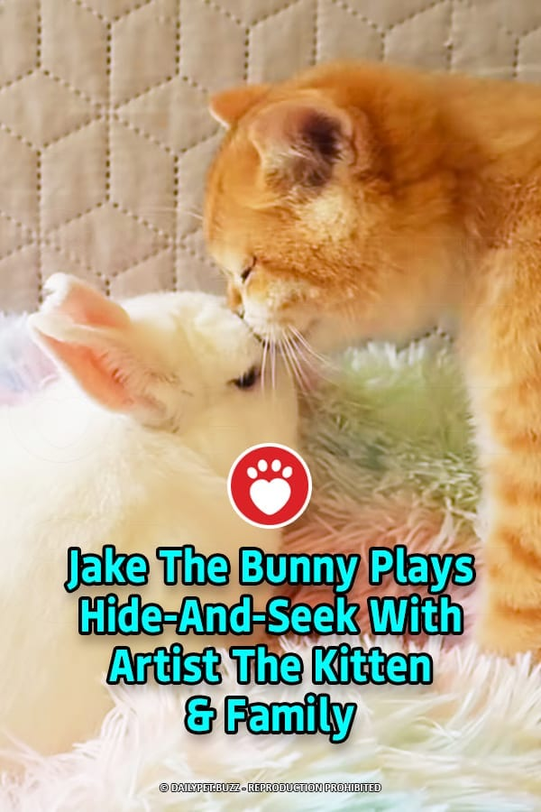Jake The Bunny Plays Hide-And-Seek With Artist The Kitten & Family