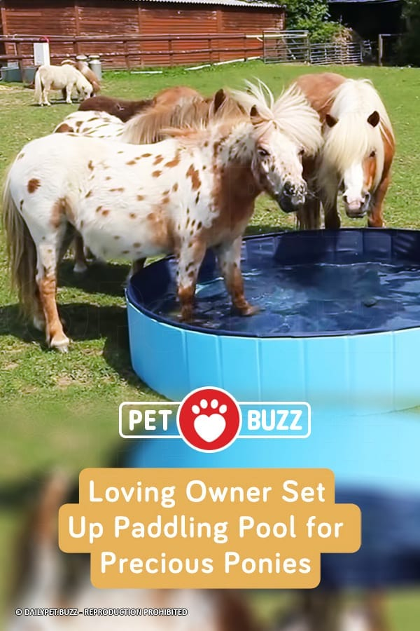 Loving Owner Set Up Paddling Pool for Precious Ponies
