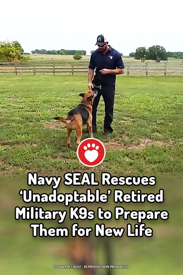 Navy SEAL Rescues 'Unadoptable' Retired Military K9s to Prepare Them for New Life