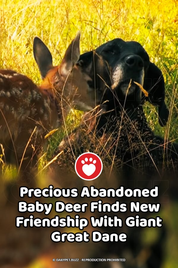 Precious Abandoned Baby Deer Finds New Friendship With Giant Great Dane