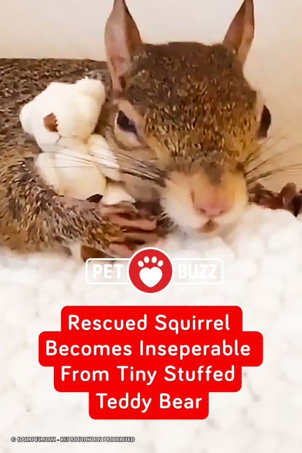 Rescued Squirrel Becomes Inseparable From Tiny Stuffed Teddy Bear
