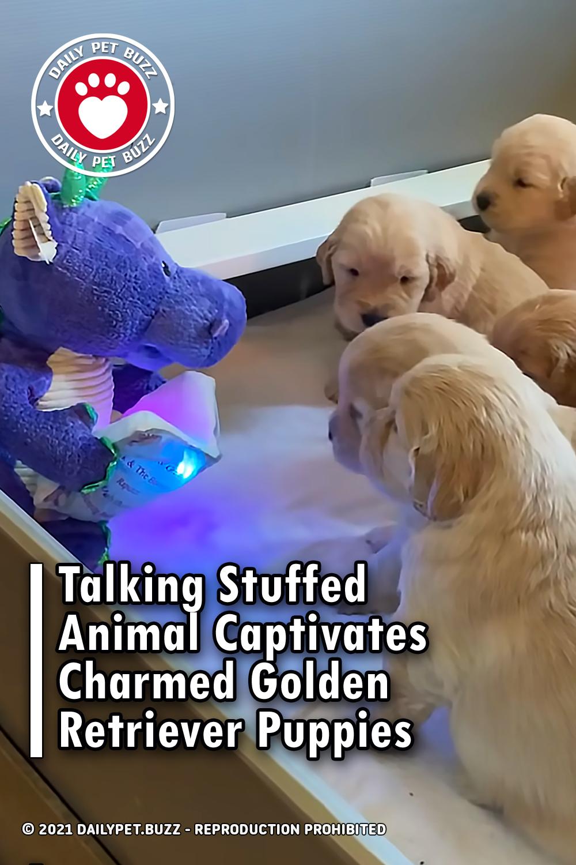 Talking Stuffed Animal Captivates Charmed Golden Retriever Puppies