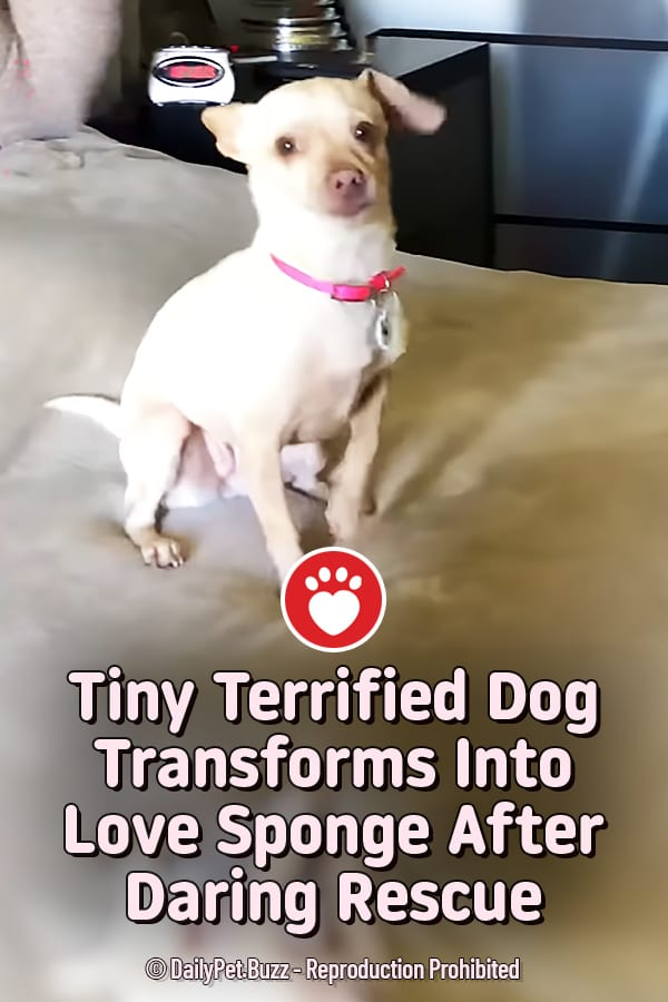 Tiny Terrified Dog Transforms Into Love Sponge After Daring Rescue
