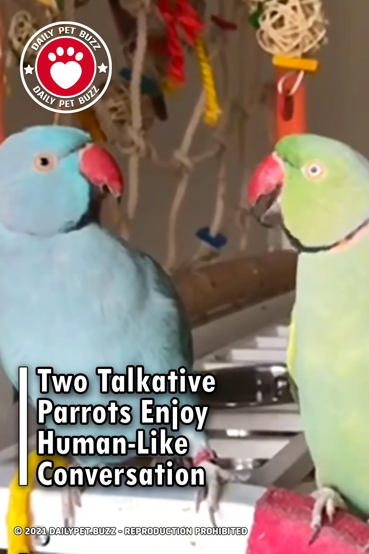 Two Talkative Parrots Enjoy Human-Like Conversation