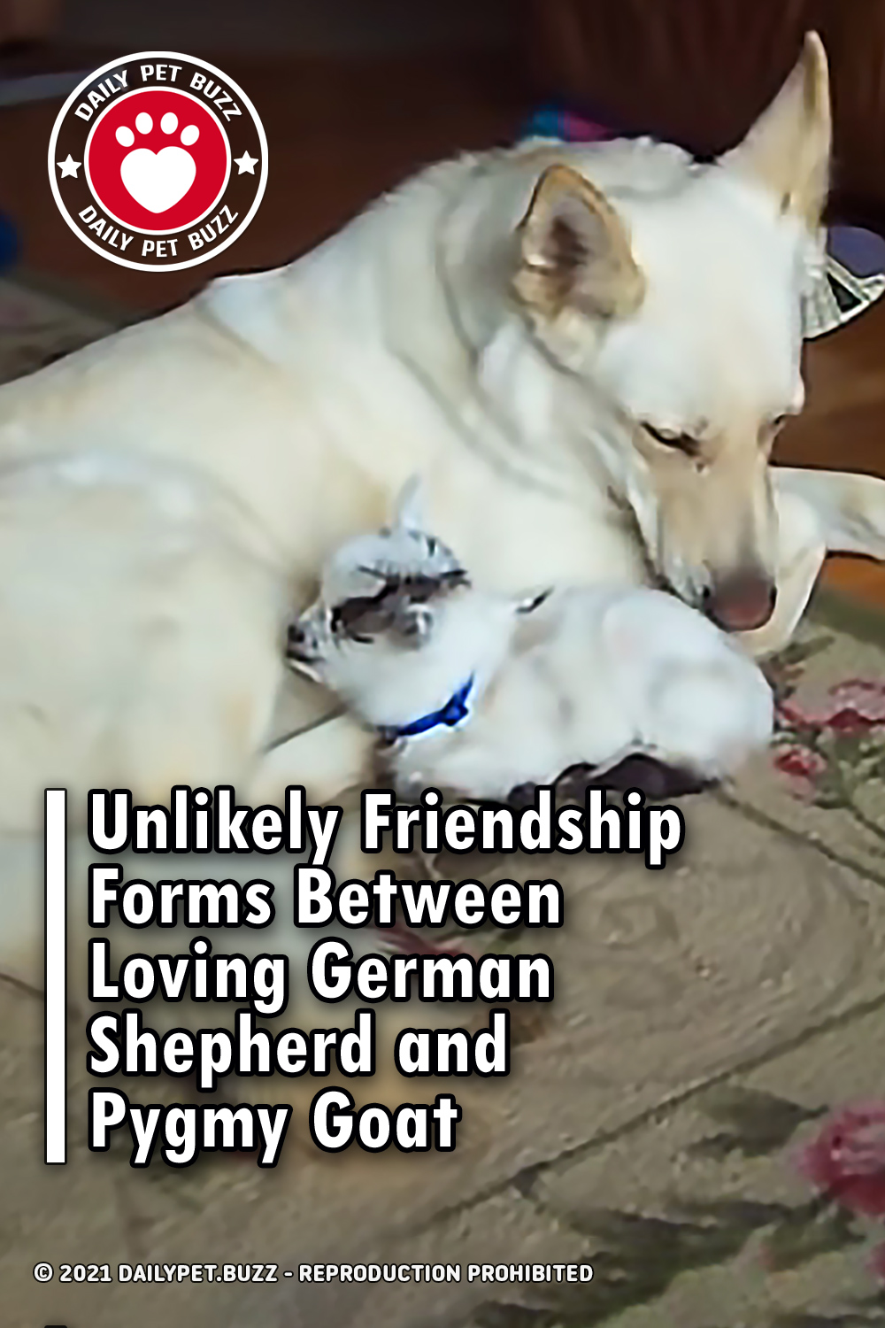 Unlikely Friendship Forms Between Loving German Shepherd and Pygmy Goat