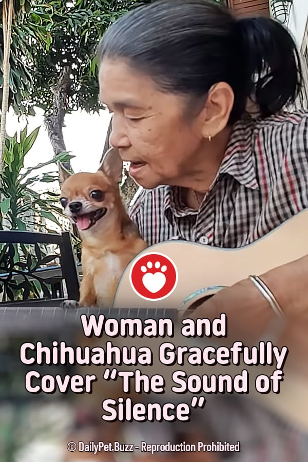 "Woman and Chihuahua Gracefully Cover ""The Sound of Silence"""