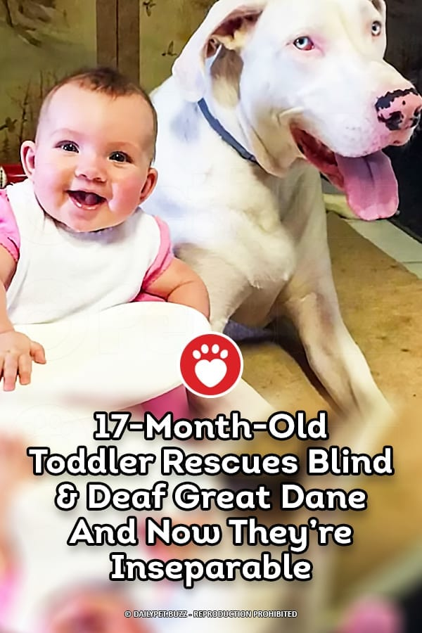 17-Month-Old Toddler Rescues Blind & Deaf Great Dane And Now They\'re Inseparable