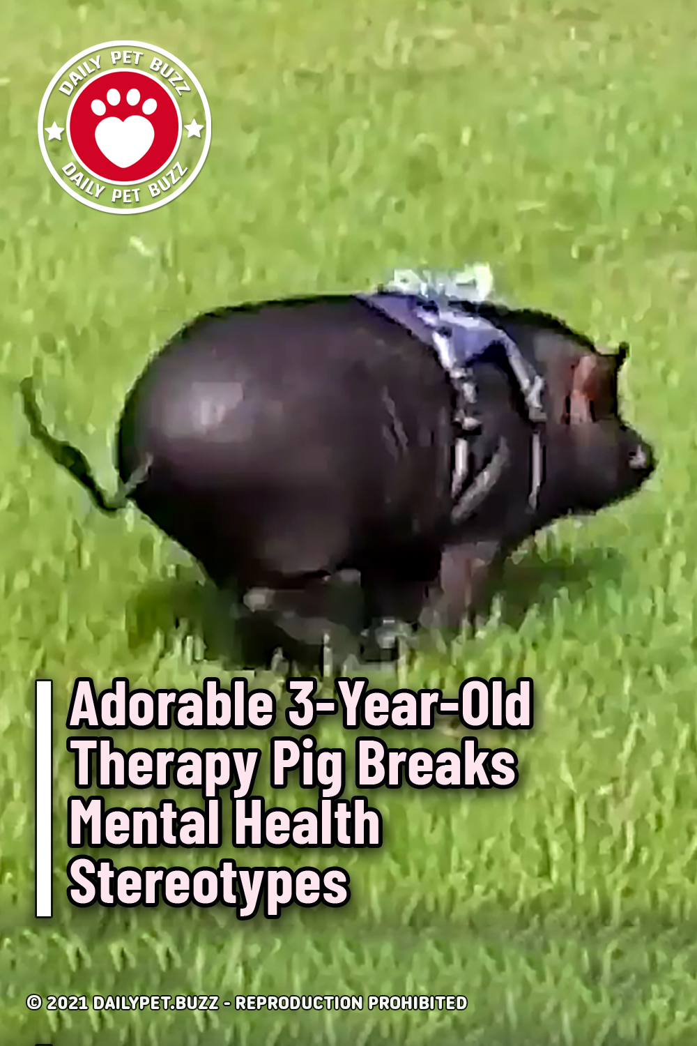 Adorable 3-Year-Old Therapy Pig Breaks Mental Health Stereotypes