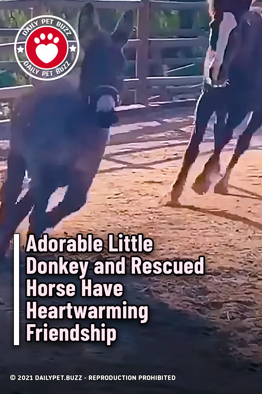 Adorable Little Donkey and Rescued Horse Have Heartwarming Friendship