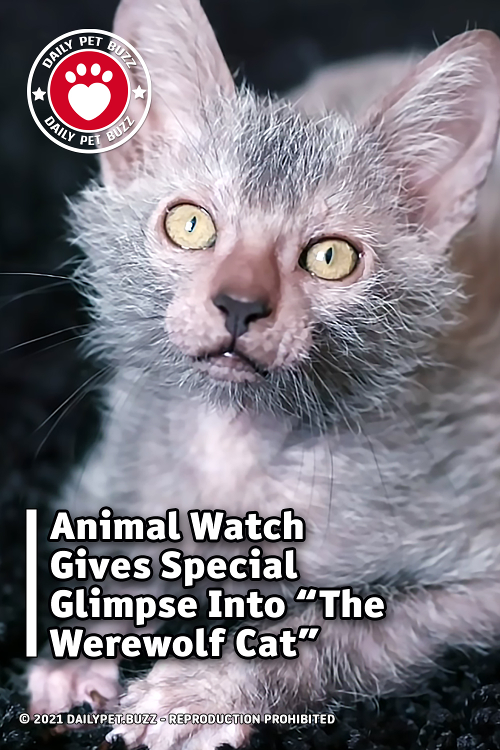 "Animal Watch Gives Special Glimpse Into ""The Werewolf Cat"""