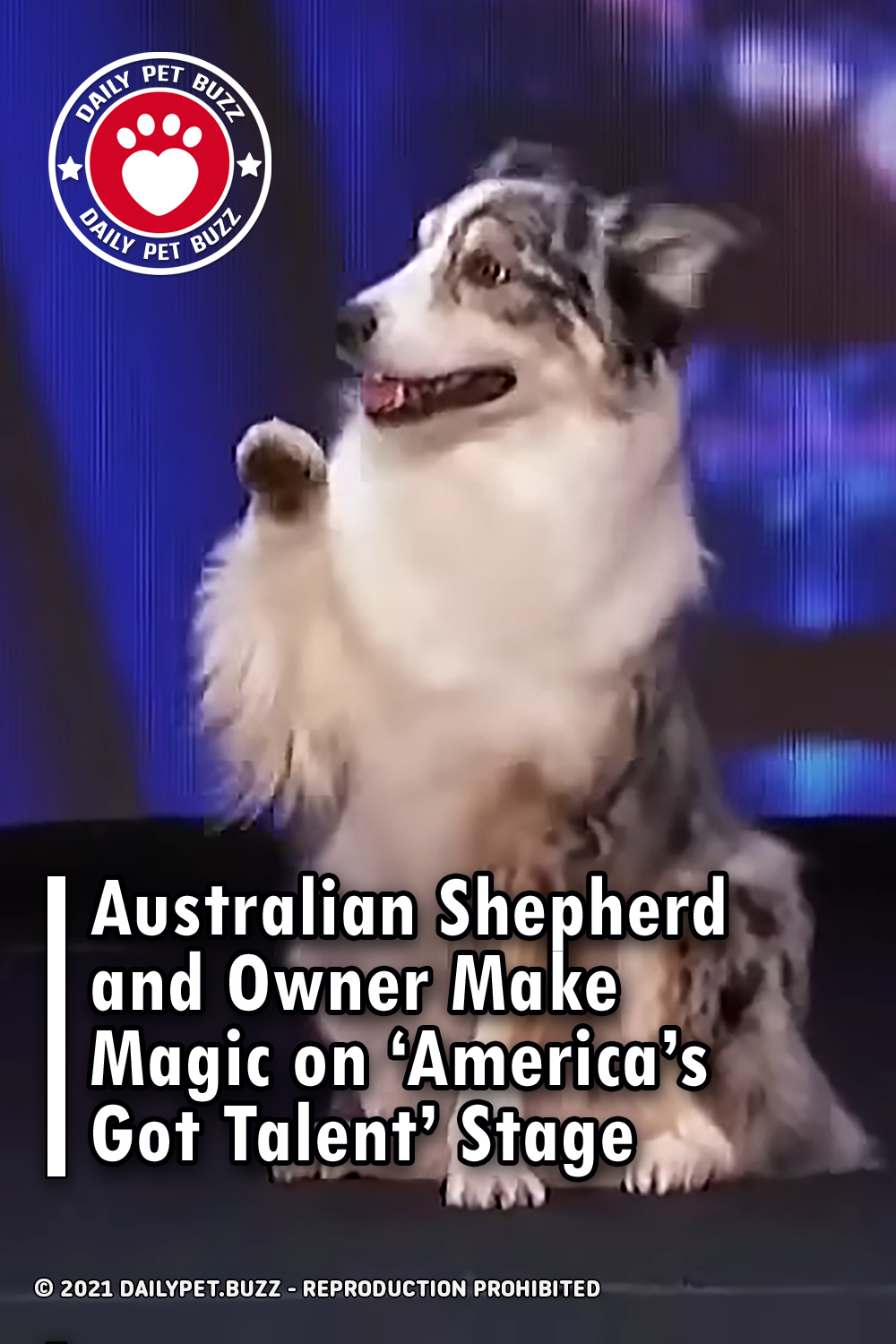 Australian Shepherd and Owner Make Magic on 'America's Got Talent' Stage