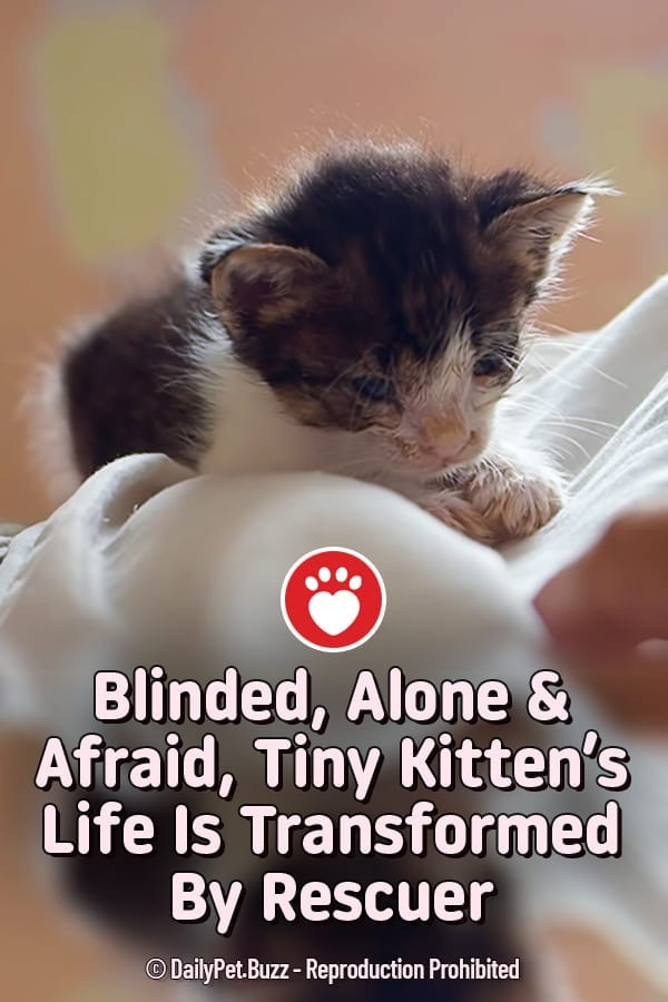 Blinded, Alone & Afraid, Tiny Kitten\'s Life Is Transformed By Rescuer
