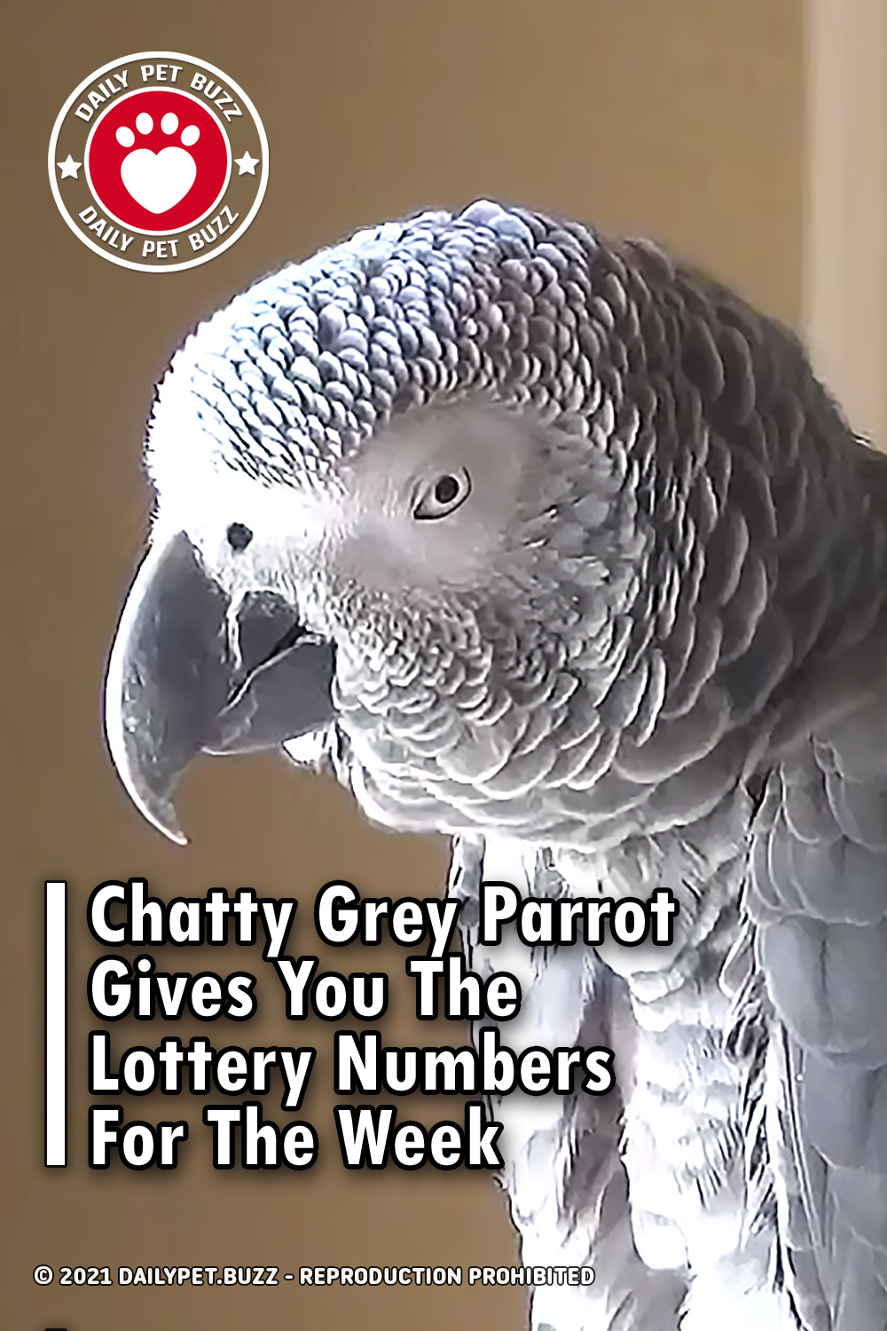Chatty Grey Parrot Gives You The Lottery Numbers For The Week