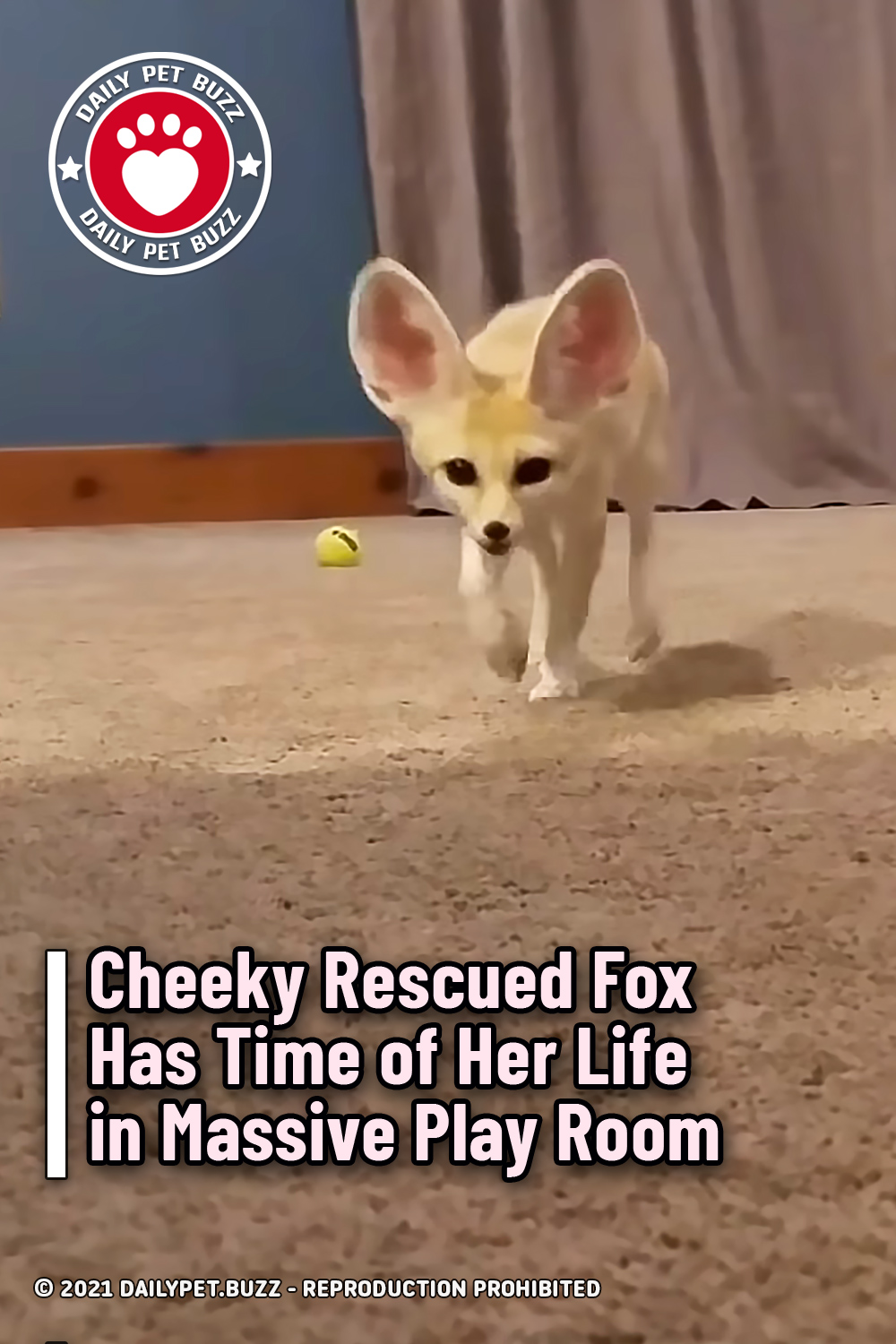 Cheeky Rescued Fox Has Time of Her Life in Massive Play Room