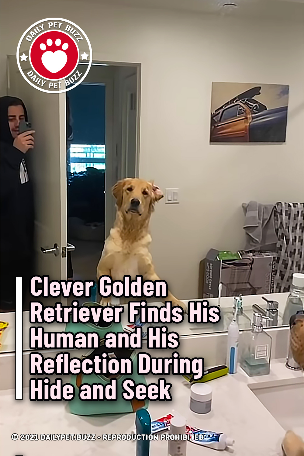 Clever Golden Retriever Finds His Human and His Reflection During Hide and Seek