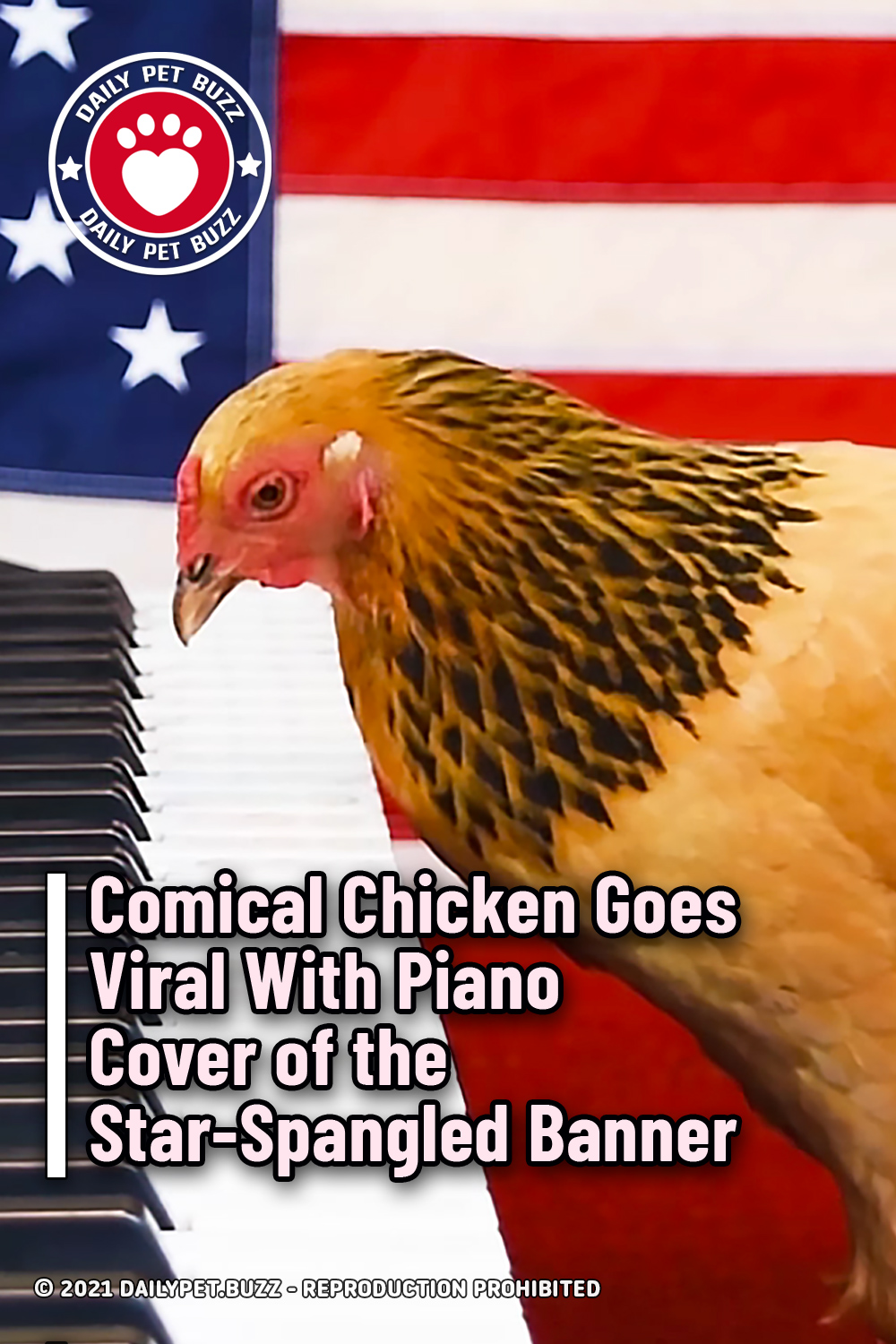Comical Chicken Goes Viral With Piano Cover of the Star-Spangled Banner
