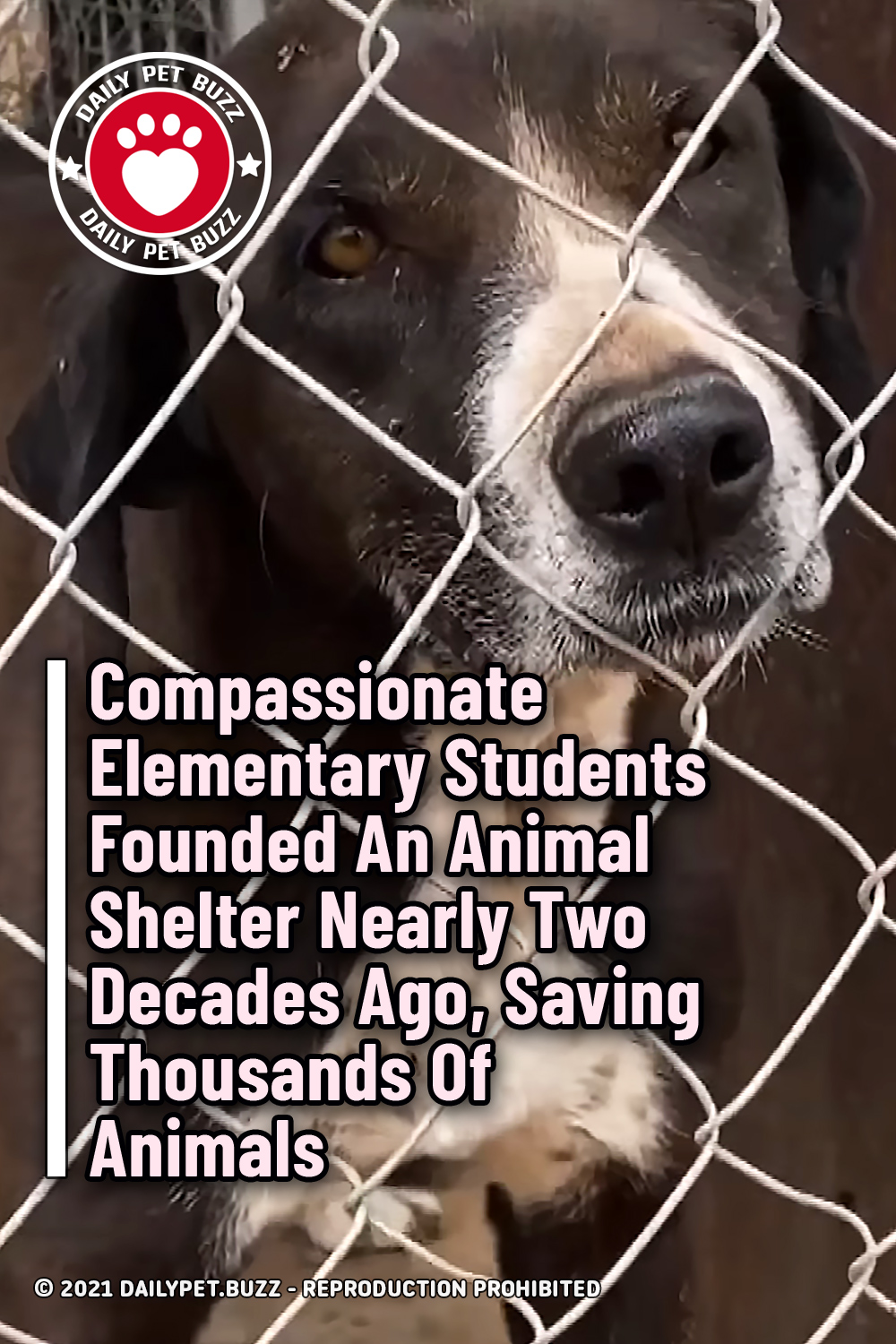 Compassionate Elementary Students Founded An Animal Shelter Nearly Two Decades Ago, Saving Thousands Of Animals