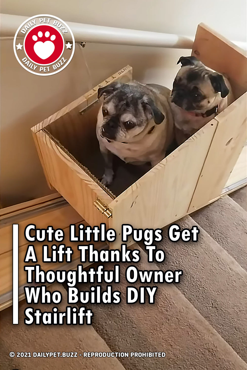 Cute Little Pugs Get A Lift Thanks To Thoughtful Owner Who Builds DIY Stairlift
