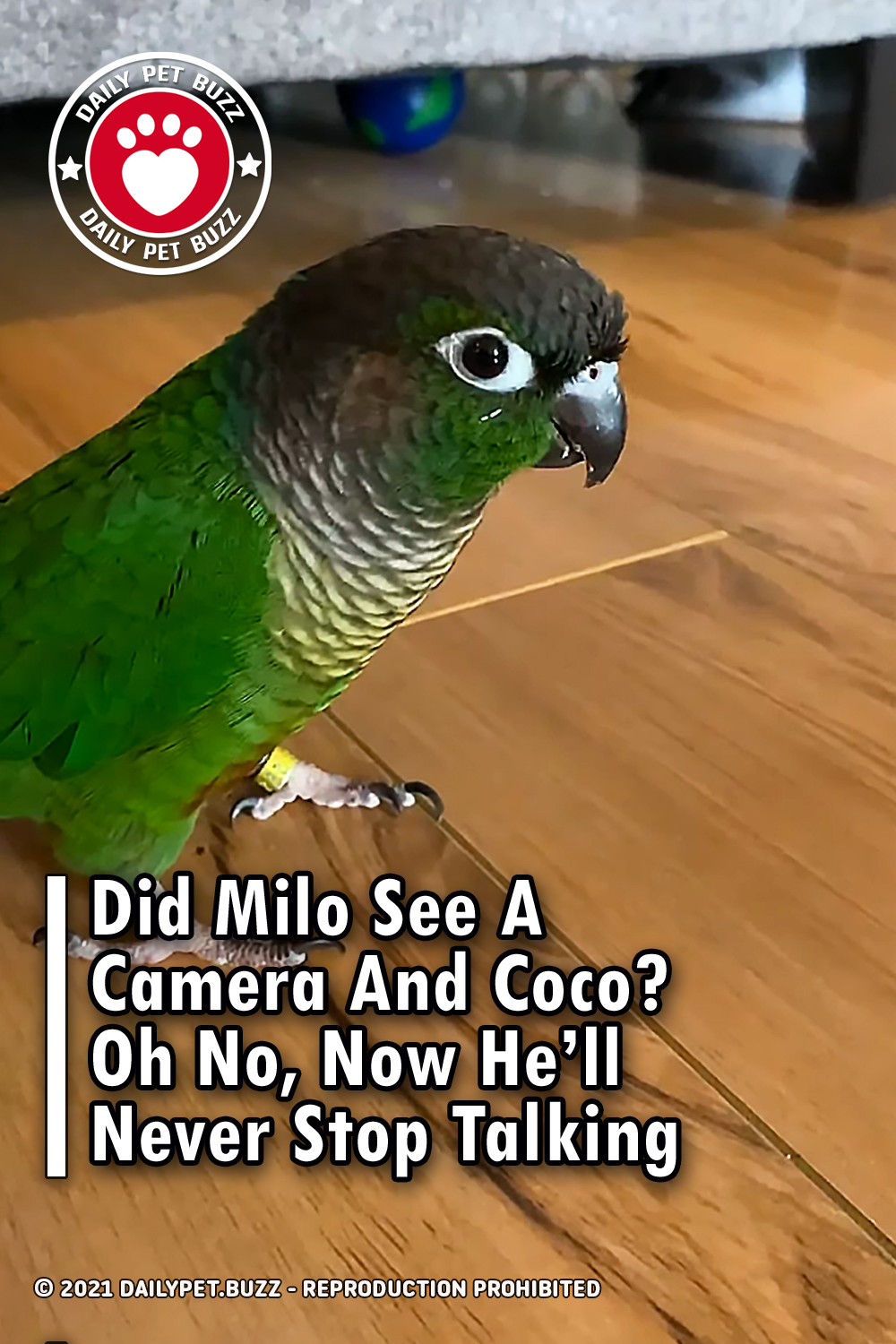 Did Milo See A Camera And Coco? Oh No, Now He'll Never Stop Talking