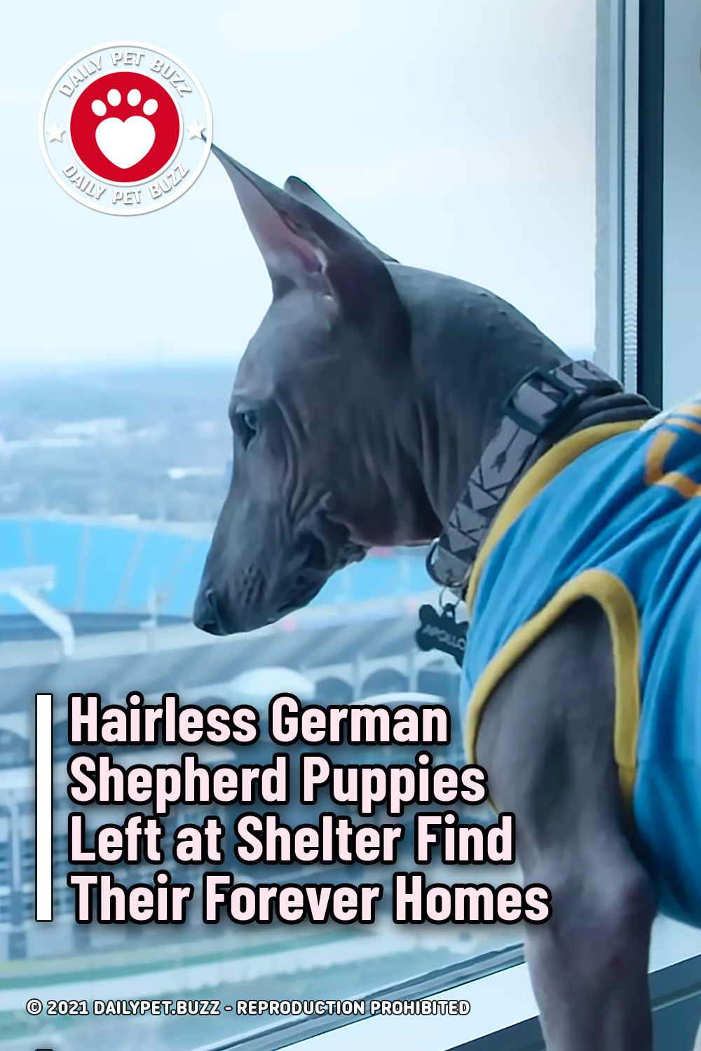 Hairless German Shepherd Puppies Left at Shelter Find Their Forever Homes