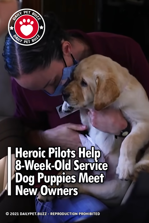 Heroic Pilots Help 8-Week-Old Service Dog Puppies Meet New Owners