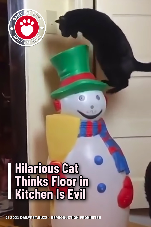 Hilarious Cat Thinks Floor in Kitchen Is Evil