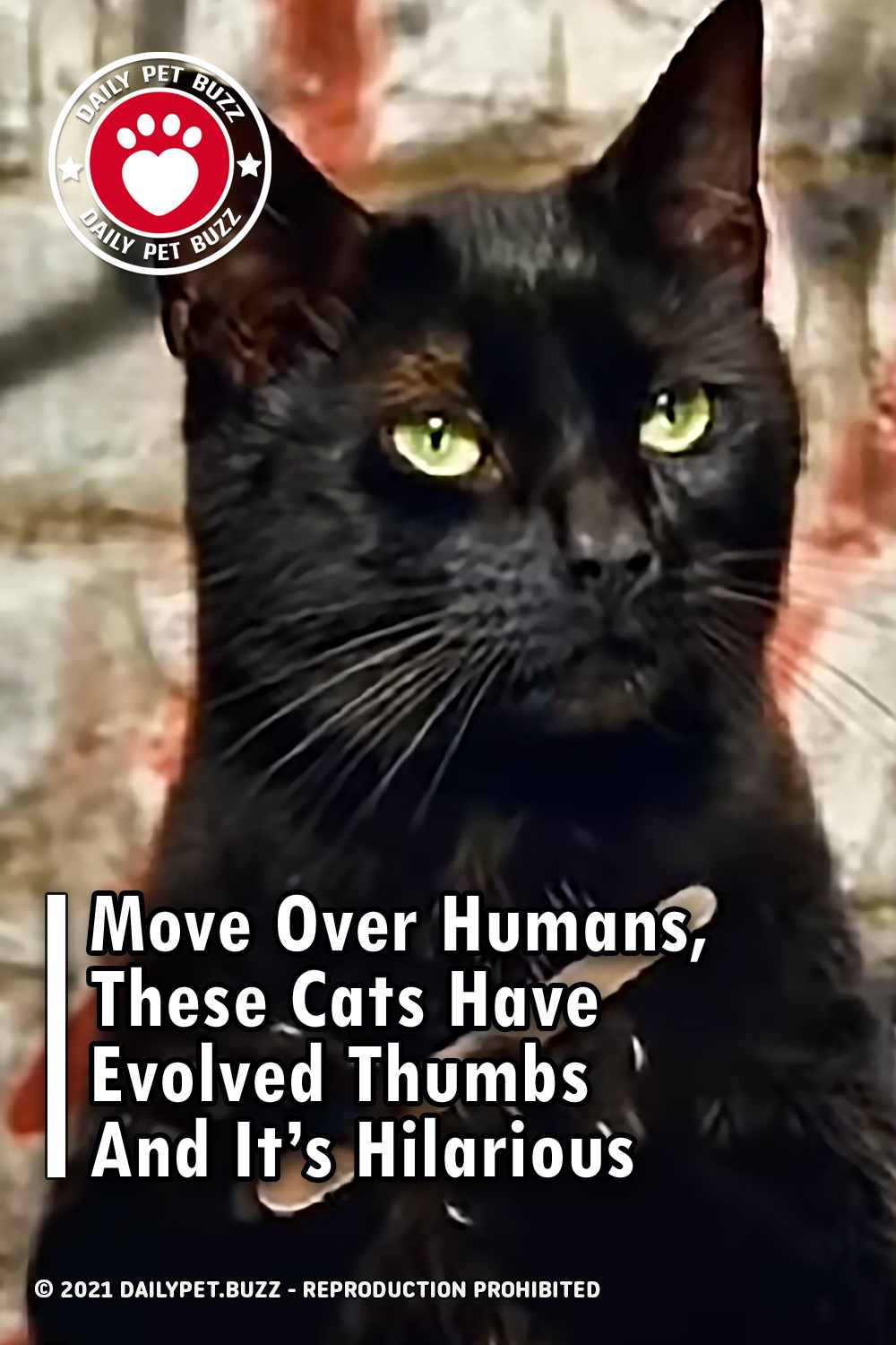 Move Over Humans, These Cats Have Evolved Thumbs And It\'s Hilarious