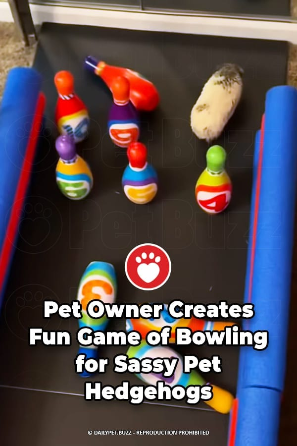 Pet Owner Creates Fun Game of Bowling for Sassy Pet Hedgehogs
