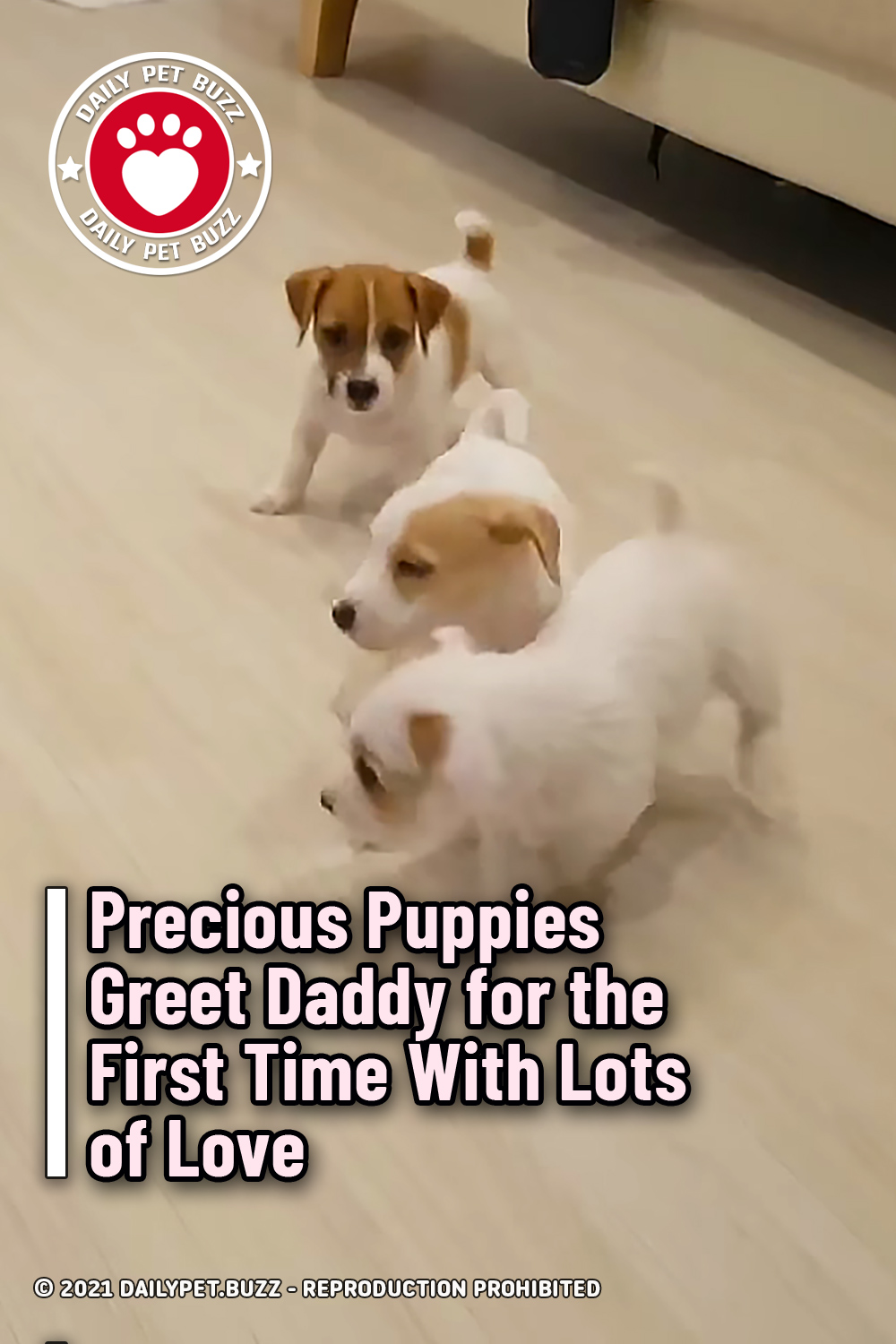 Precious Puppies Greet Daddy for the First Time With Lots of Love