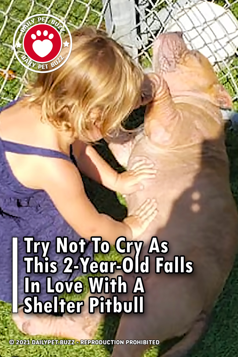 Try Not To Cry As This 2-Year-Old Falls In Love With A Shelter Pitbull