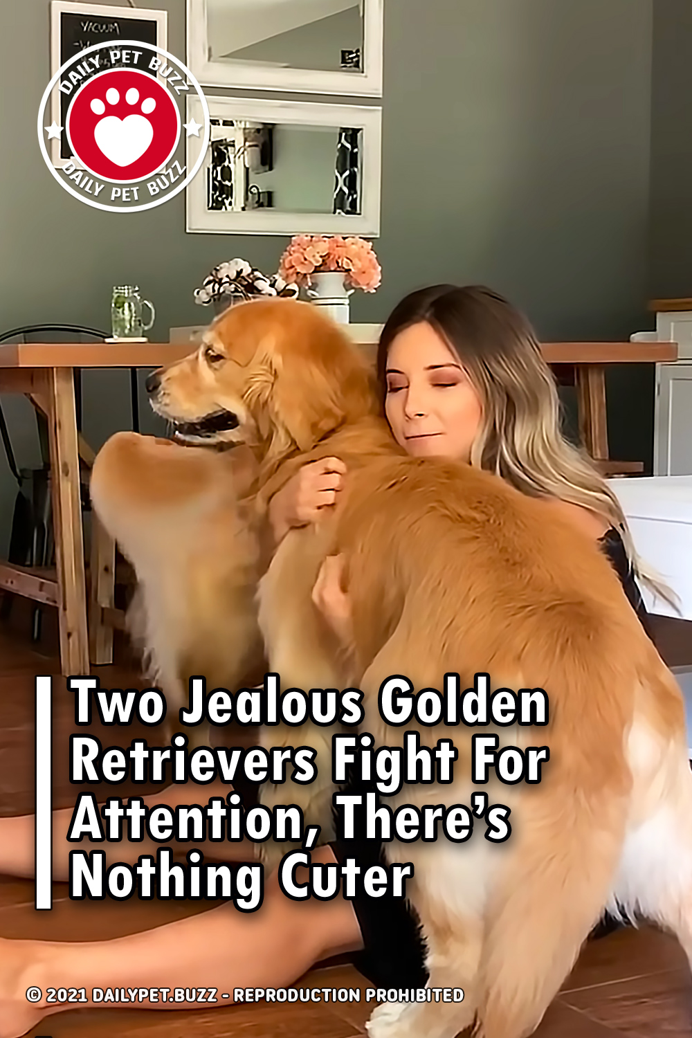 Two Jealous Golden Retrievers Fight For Attention, There\'s Nothing Cuter
