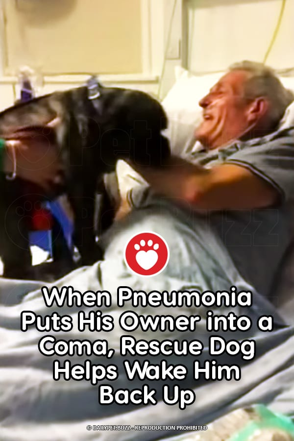 When Pneumonia Puts His Owner into a Coma, Rescue Dog Helps Wake Him Back Up
