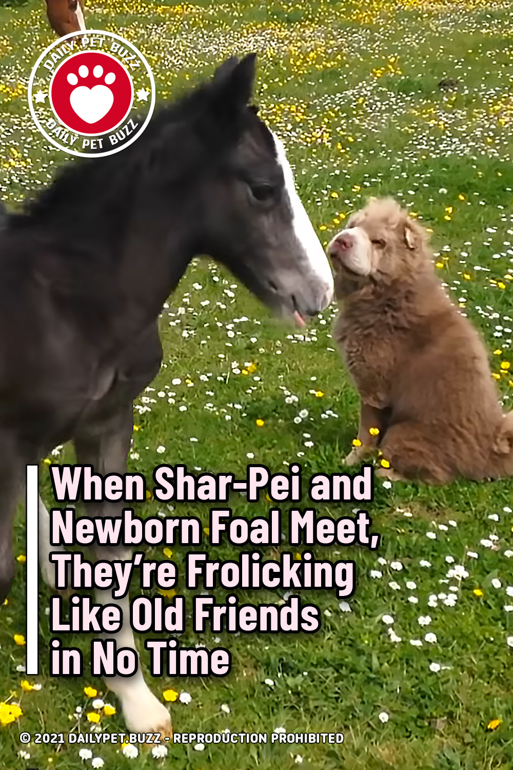 When Shar-Pei and Newborn Foal Meet, They're Frolicking Like Old Friends in No Time