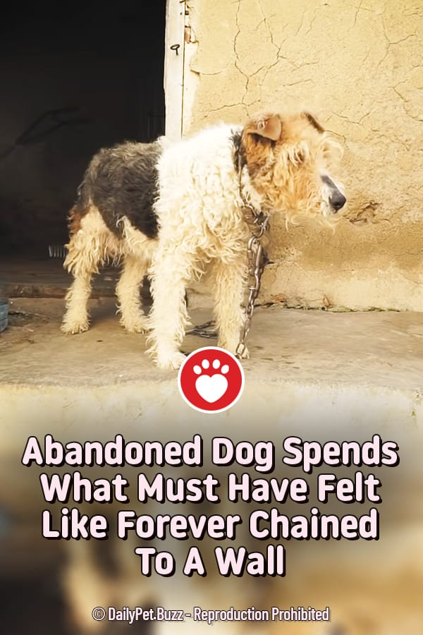 Abandoned Dog Spends What Must Have Felt Like Forever Chained To A Wall