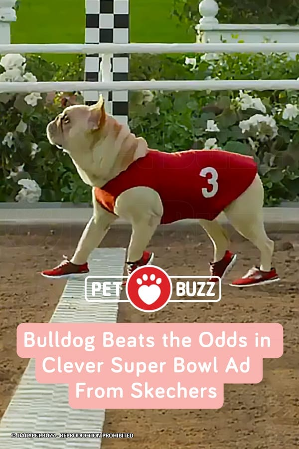 Bulldog Beats the Odds in Clever Super Bowl Ad From Skechers