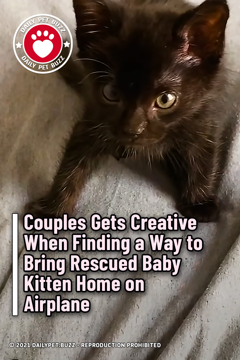 Couple Gets Creative When Finding a Way to Bring Rescued Baby Kitten Home on Airplane